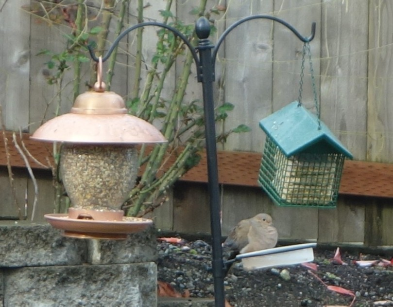 We gave him some bird seed he couldn't refuse.