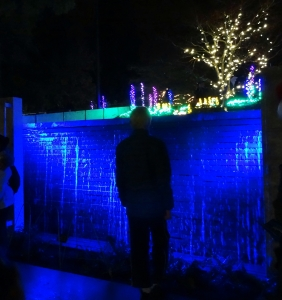 "The Young Master at the Bellevue Botanical Gardens' ""Garden d'Lights"" exhibition."