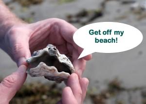 clam cartoon