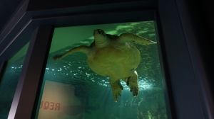I didn't know the Great A'Tuin lived in the Vannes Aquarium.