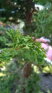 A leaf closeup at Redmond Town Center.