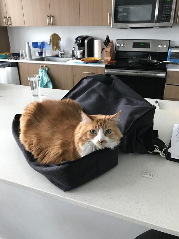 transit cat